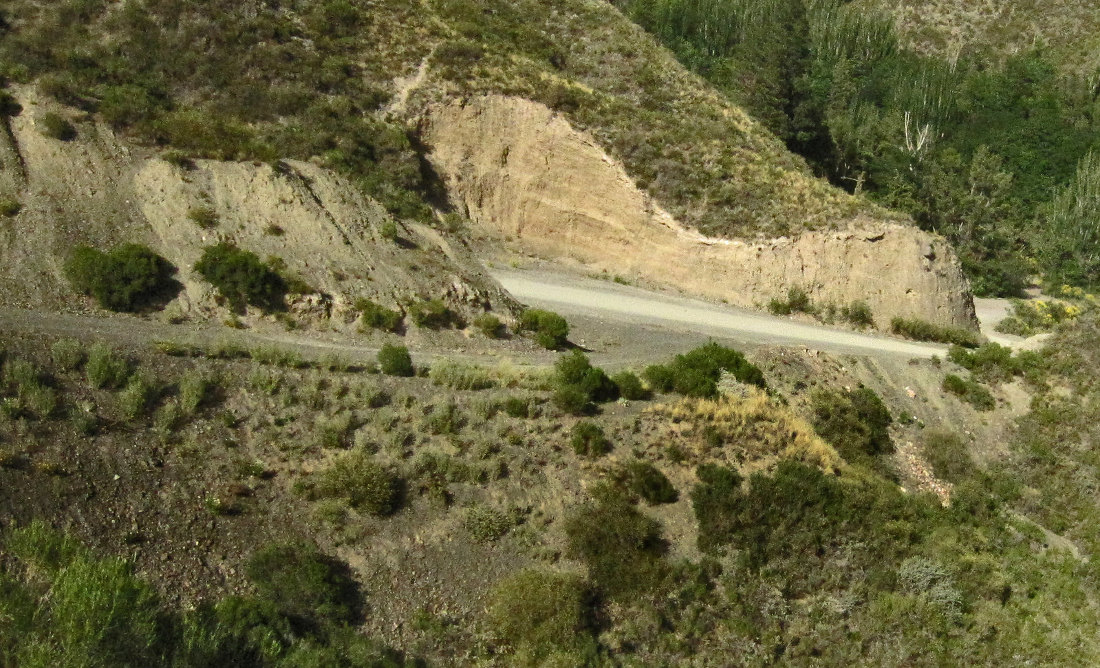 Mendoza 259