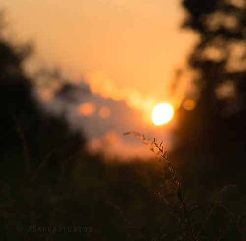 sunset summer nature golden pittsburgh pentax bokeh goldenrod pa framing goldensunset northpark dfa100mm k5ii pentaxk5ii