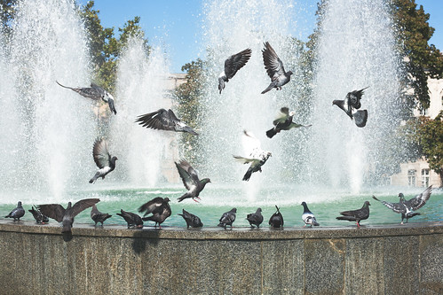 Doves group in fountain   by Artur Pilipchuck
