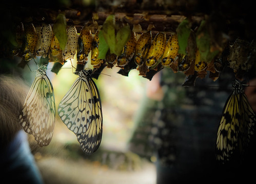 Farming butterflies | by judy dean