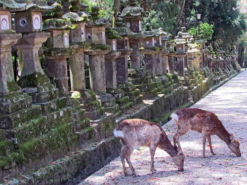 Nara - Japan | by -marika bortolami-