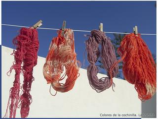 Colores naturales cochinilla Lanzarote Mar12 LZ 139
