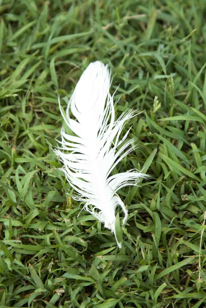 White feather | White feather lying grass lawn | Amer.Ghazzal | Flickr