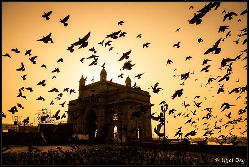 birds silhouette fly pigeon dreams mumbai gatewayofindia ujjal nikond90 nikon18105mm ujjaldey ujjaldeyin