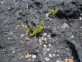 Hawai'i Volcanoes NP -Kathy 2 | by KathyCat102