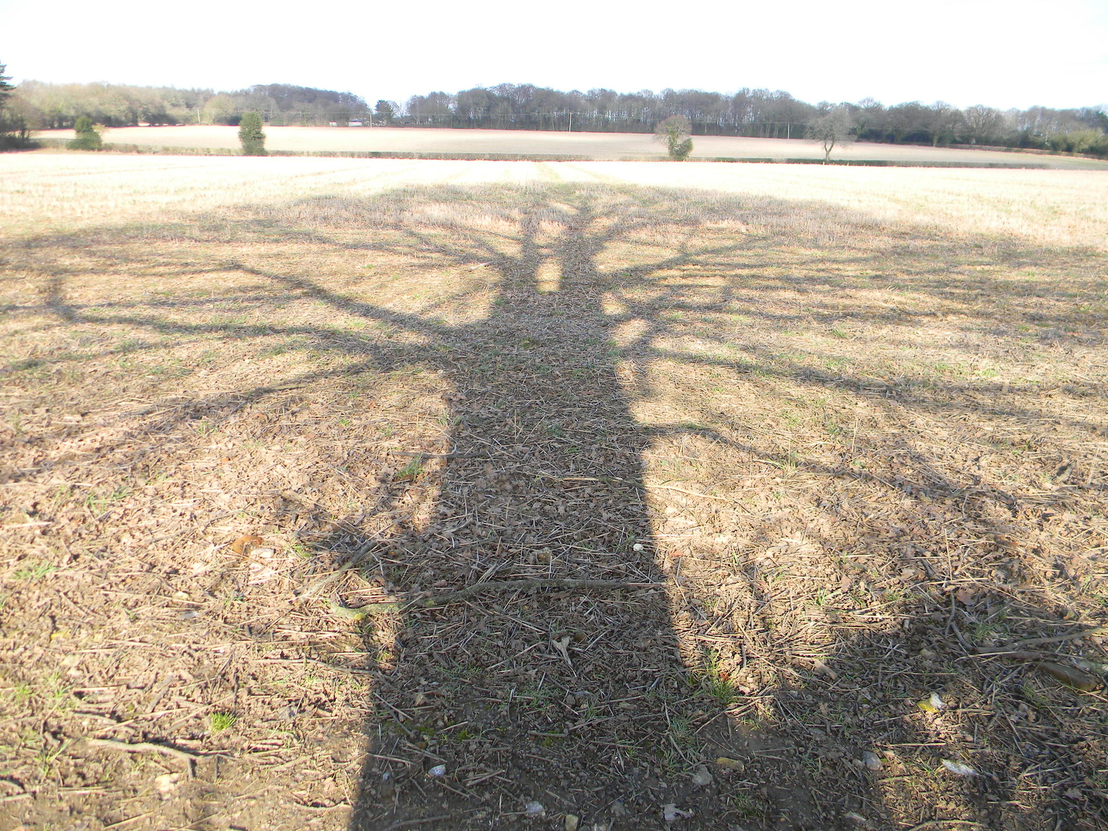 Tree shadow Chesham to Great Missenden