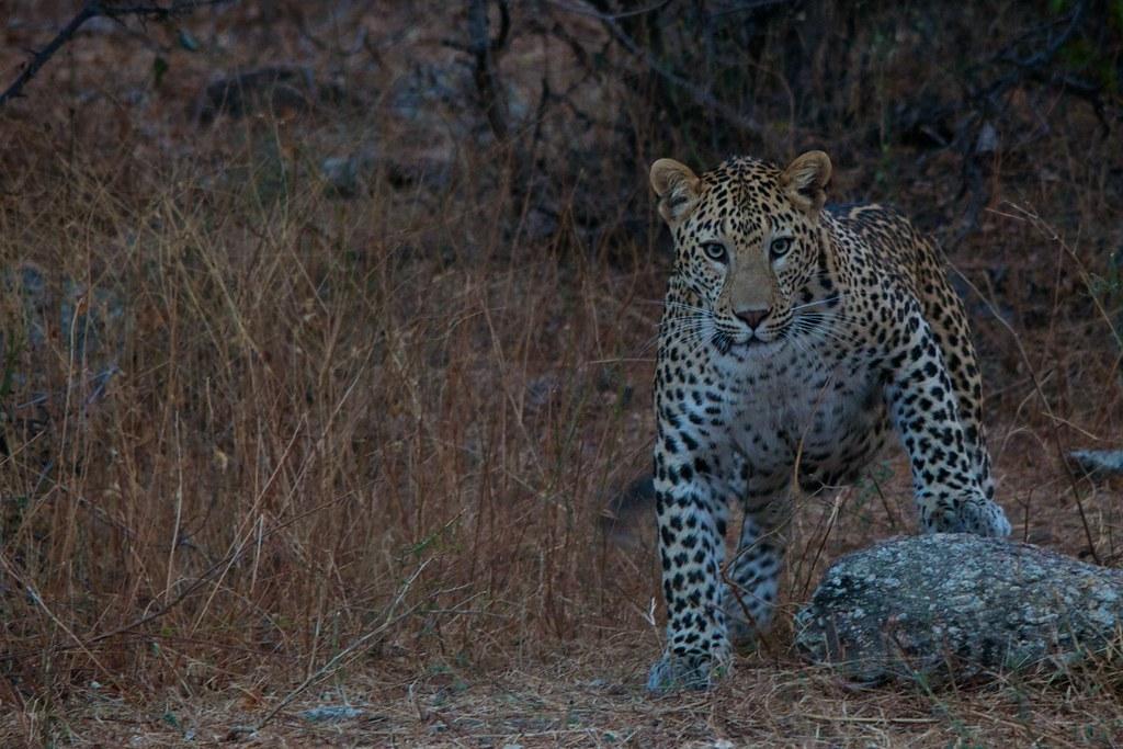 Bera Wildlife Sanctuary