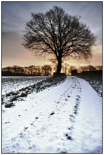 winter snow tree rural sunrise geotagged track farm lane worcestershire daybreak bockleton romerswood geo:lat=52265409510339964 geo:lon=25862075382842704