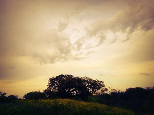 sky landscape bees bee wildflowers oaks bluebonnets beekeeping beekeeper texasbees seguinbees thefarmbeeyard