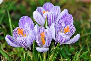 Le printemps est là | by chrlnz