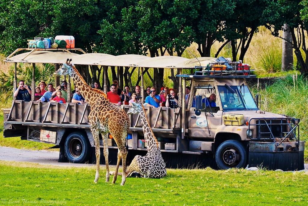Giraffe Models