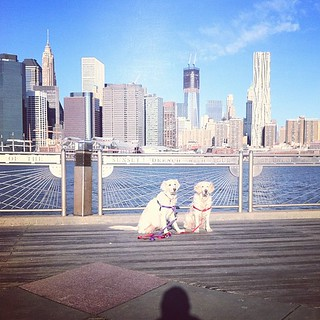 Daily East River Dogs 19 February 2012 | by epc