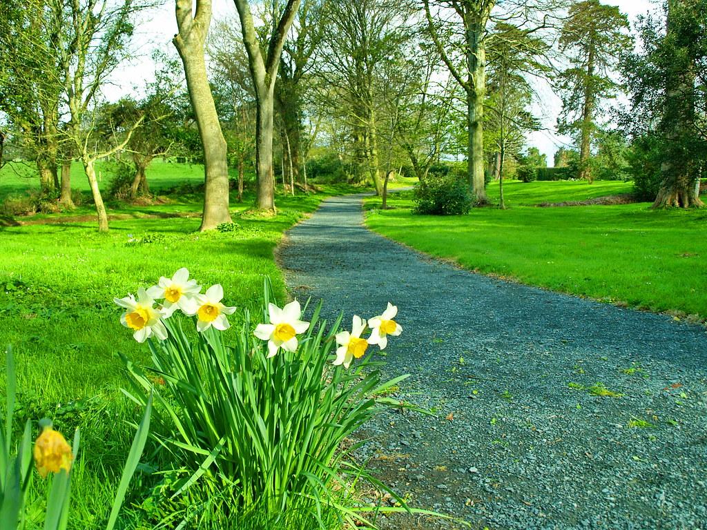 a spring walk | end of dafs | sean ireland | Flickr