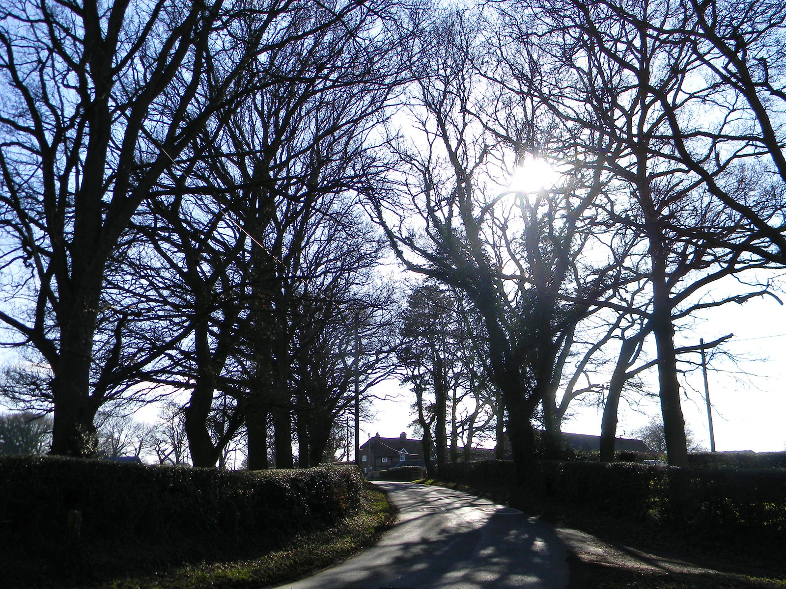 Tree-lined lane Chesham to Great Missenden
