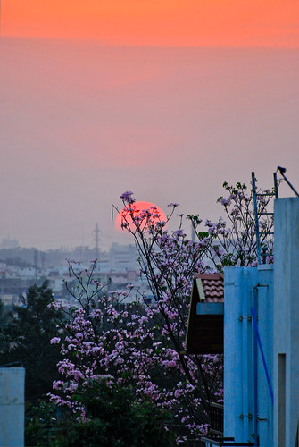 flowers houses sunset tree clouds nikon d60 ranjini frommybalcony