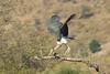 Marabou stork by Johan Assen