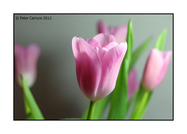 Spring Is In The Air - March 8, 2012