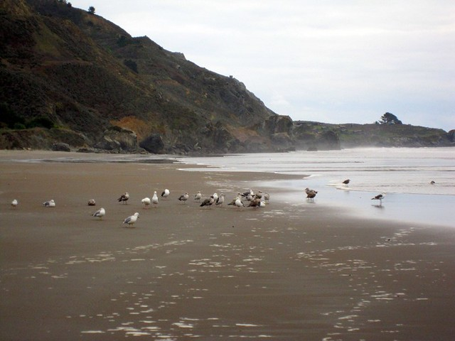 Seagulls on Stinson beach 2011