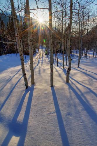 trees winter sunset sun snow long shadows blanket aspens sunburst littlecottonwoodcanyon