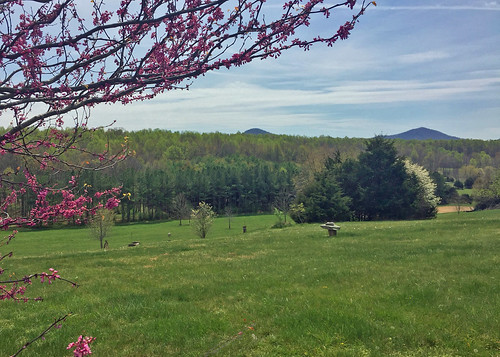 color green virginia awakening country views bloom springtime countryliving rockbridgecounty nottobeusedwithoutmypermission adfimages