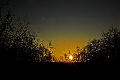 trees sunset canon tamron