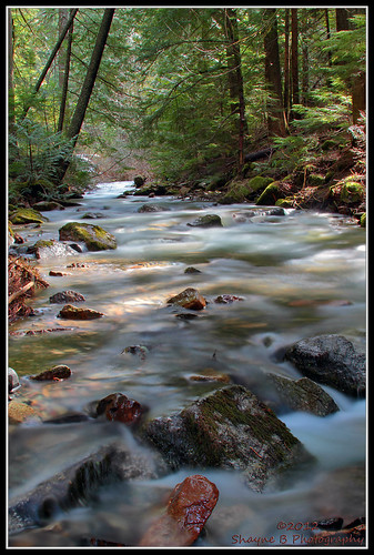 water creek outdoors moss rocks idaho cda coeurdalene coeurdaleneidaho beautycreek mosscoveredrocks cdaidaho shaynebphotography beautycreekcampground creekthatfeedsintocoeurdalene coeurdalenecreek coeurdalenecreeks beautycreekidaho beautycreekinidaho