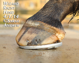 Wizard's hooves: 4/1/2014 | by Rock and Racehorses