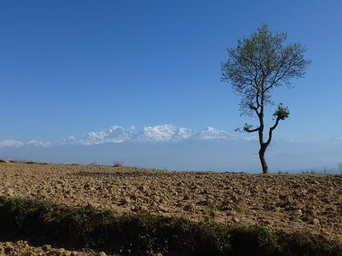 Nepal, Bandipur - boom voor de Himalaya