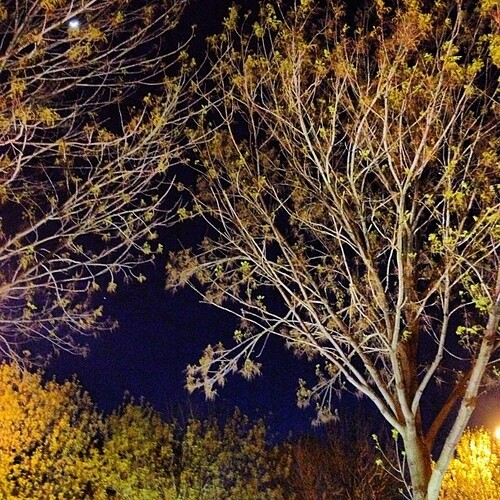 Illuminations #tree #night | by shirley319