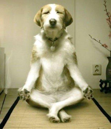 Funny Dog Meditation Moda Oldu Flickr