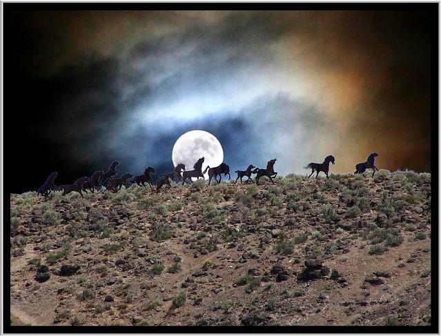 Wild Horses ~ Washington State ~ USA