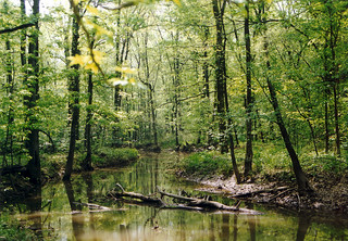 Loakfoma Creek at Noxubee | by USFWS/Southeast