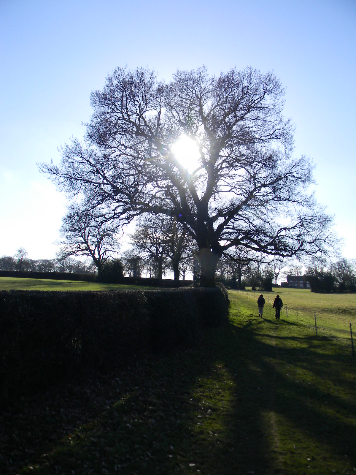 Tree sillouette Chesham to Great Missenden