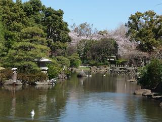 Sumida Park Cherry Blossom Festival @ Sumida Park | by *_*