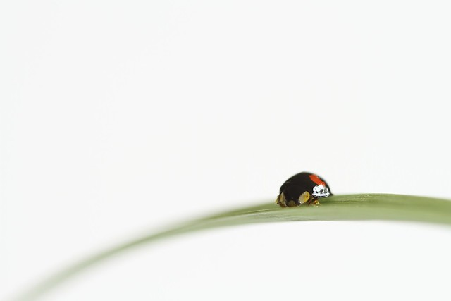 35/100: Ladybird, ladybird fly away home