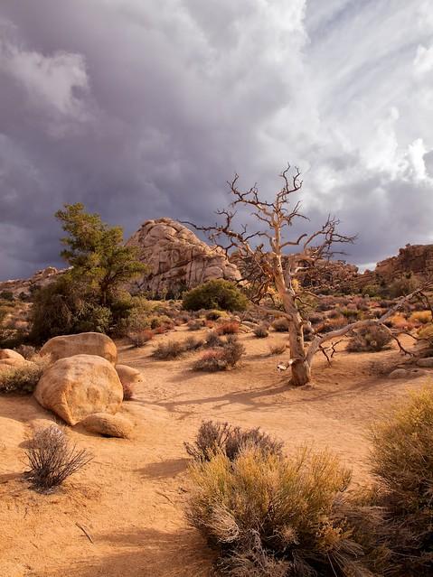 Joshua Tree National Park, Hidden Valley (Explored)