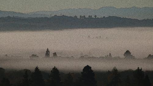 california morning mist fog landscape mendocinocounty redwoodvalley 95470 noncoloursincolour pe016