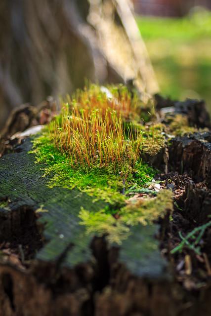Island on a tree (Carl Zeiss Jenna Flektogon 35mm f/2.4 M42 )