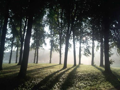 park wood light shadow sun tree nature sunrise landscape scenery bremen bürgerpark parkhotel