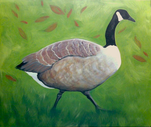 Study of a Canada Goose