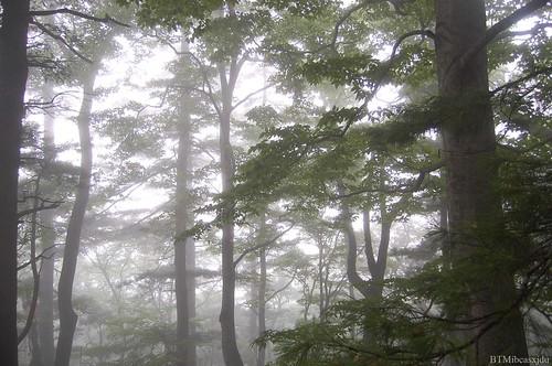 Sat, 07/25/2009 - 12:52 - BTMxjduforest5