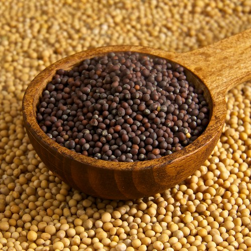 083/365 - Mustard Seeds | by djwtwo