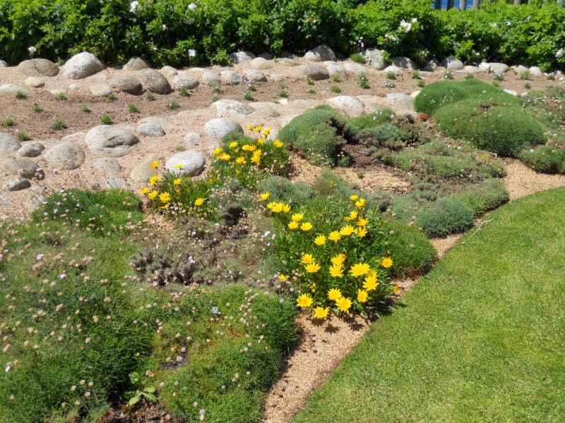Jardín con plantas y piedras decorativas 2