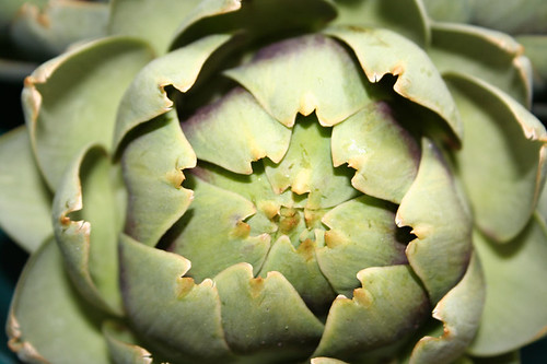 artichoke | by In All Your Glory