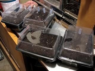 12-pack Mini Greenhouses | by joeysplanting