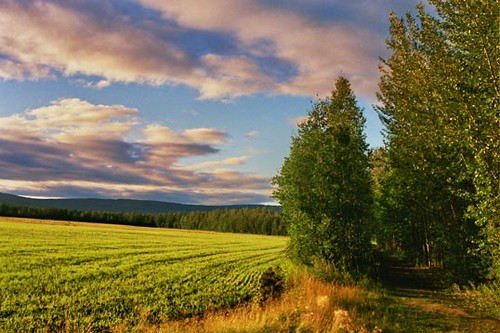 Wedgewood Resort - Fairbanks - Alaska