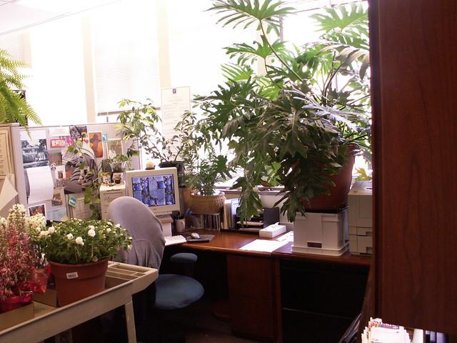 My  Office - & Leonard