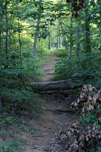 green leaves log trail bscamp06