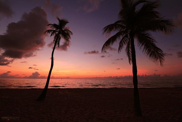 Morning Dream - Fort Lauderdale (Florida)