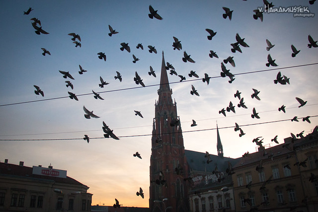 Pigeons in the air...